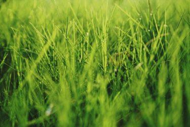 芝生の手入れ計画