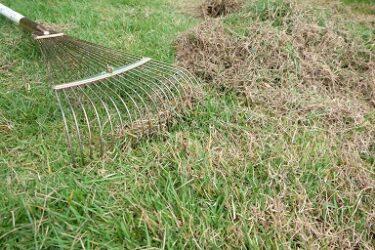 庭の草むしりと芝刈り