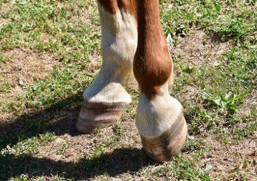 馬が踏んでもこわれない?